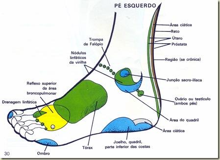 Reflexologia Mapa do Pé Esquerdo Lateral