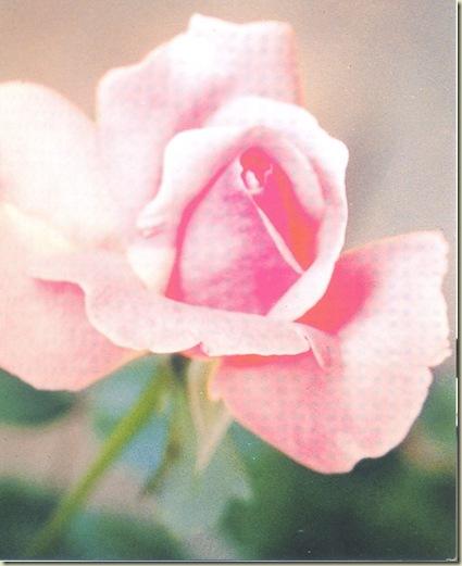 FSG Rosa Rosa