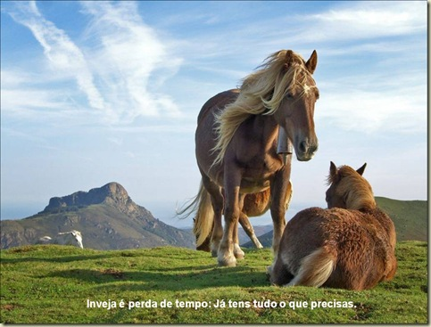 Cavalos 09