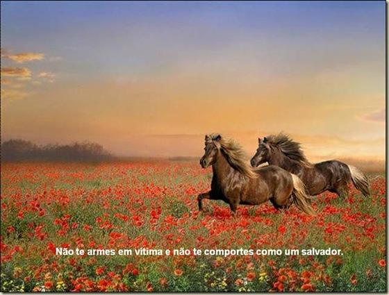 Cavalos 12