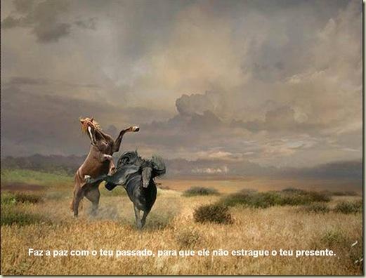 Cavalos 13