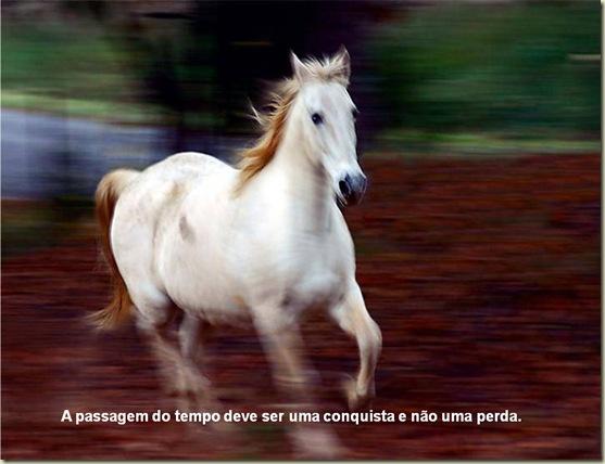 Cavalos 19