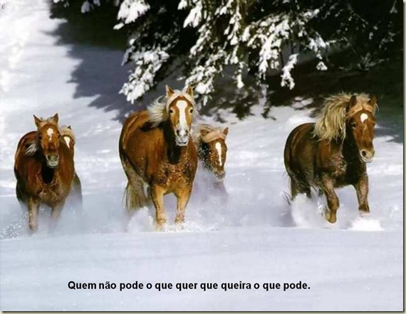 Cavalos 20
