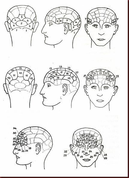 Craniologia Frenologia