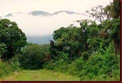 Enem Natureza Brasileira