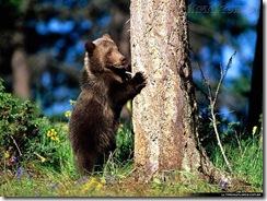 Urso filhote 01