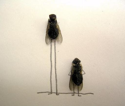 http://lh3.ggpht.com/_bKN77pn74dA/Sth97qTQOLI/AAAAAAAACyo/ZLXR3a4w0GU/humor-with-dead-flies14.jpg