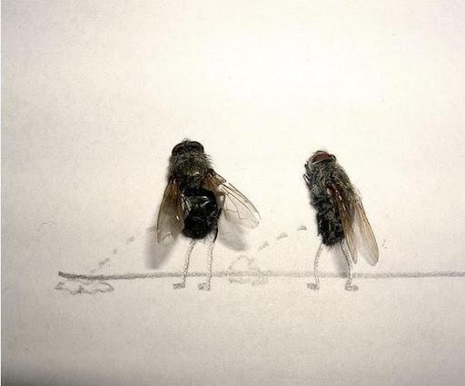 http://lh3.ggpht.com/_bKN77pn74dA/Sth9p6jDoXI/AAAAAAAACyY/qqYWc1idq68/humor-with-dead-flies02.jpg