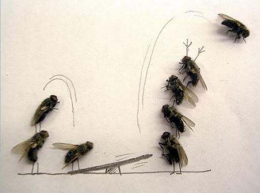 http://lh3.ggpht.com/_bKN77pn74dA/Sth9qA5C7VI/AAAAAAAACyg/Ix-W3hHbikw/humor-with-dead-flies05.jpg