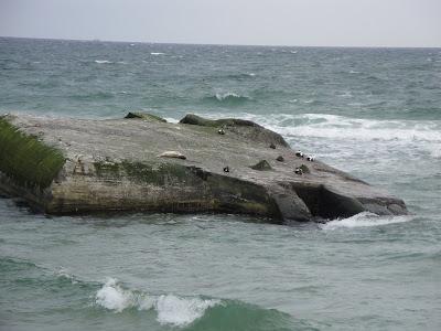La foca que vimos