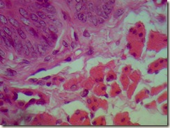 histology slide view