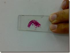 slide of histology 72