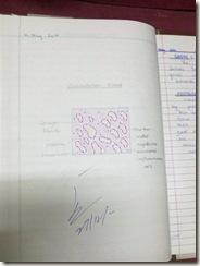 granulation tissue diagram H&E