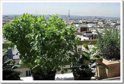ABB-EiffelTowerViewW-Plants