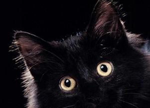 gatto-nero-scaramanzia