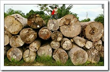 indonesia_woodworking_timber_export