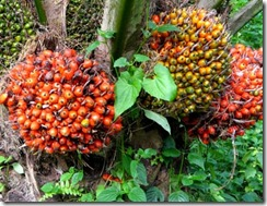 indonesia_cpo_crude_palm_oil_export_value
