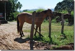 Santiago dos Parques - 05-09-1010 039