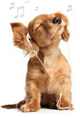 perro-musica2