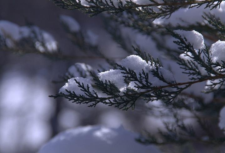 snow2bbb