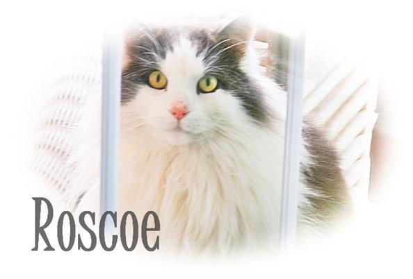 roscoe5