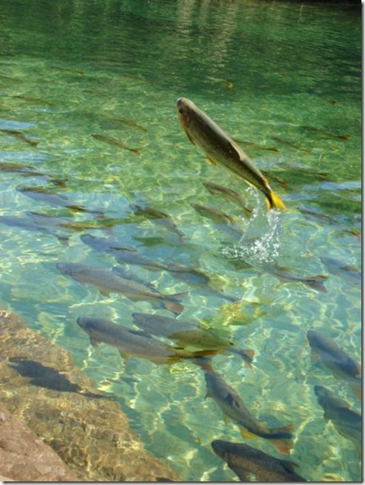 Foto Concurso Meio Ambiente