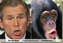 Bush and chimp