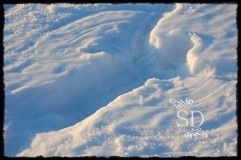 SnowAngel2011