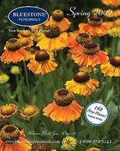 Bluestone Perennial Catalog Photo