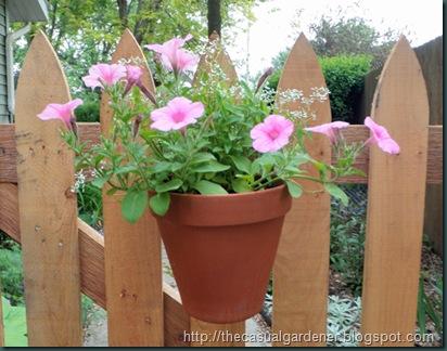 Proven Winners flowers in