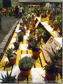 succulent judging at the Philly flower show 2010