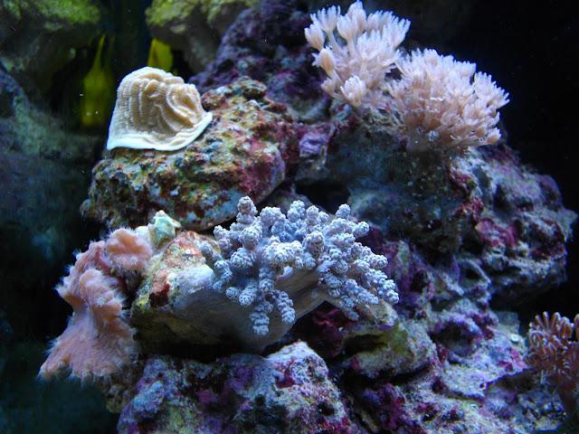 des coraux en pleine forme
