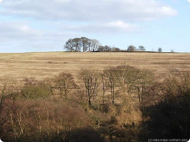 brown fields and trees