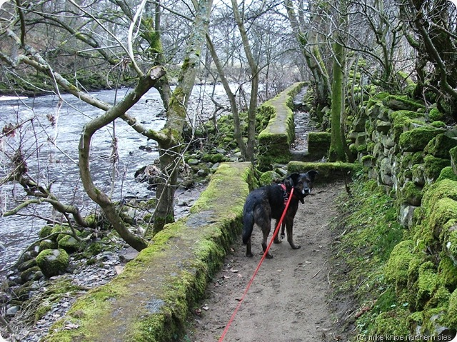 riverside path teesdale
