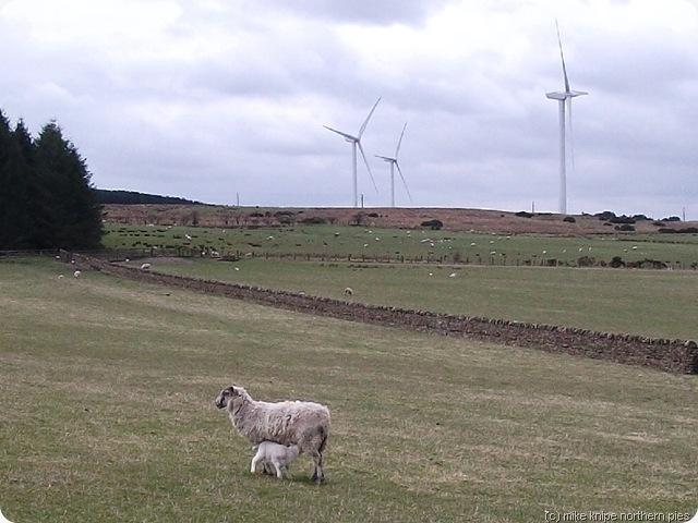 lambs and wind generators