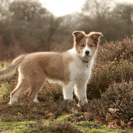 Sunny at Wenhaston by Lynda Snowling - Animals - Dogs Puppies