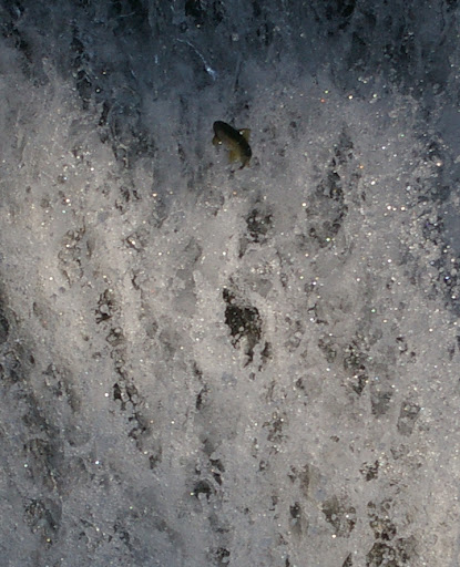 請教這種情況的魚怎麼拍?