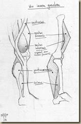 anatomie_bein5