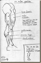 anatomie_bein6