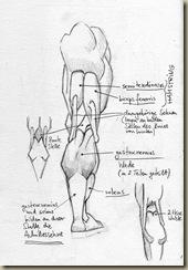 anatomie_bein7