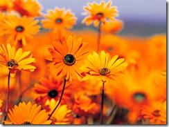 Flores laranja