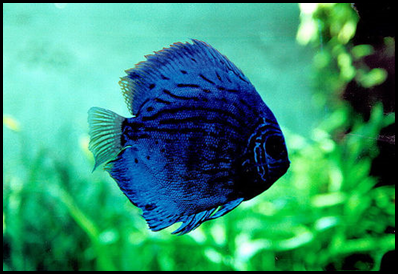 BM10- blue fish2