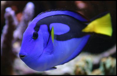 BM10- blue fish3