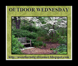 OutdoorWednesdaybutton54333333333