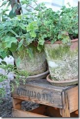 hagen og sneglekrig 012