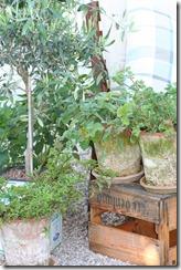 hagen og sneglekrig 013