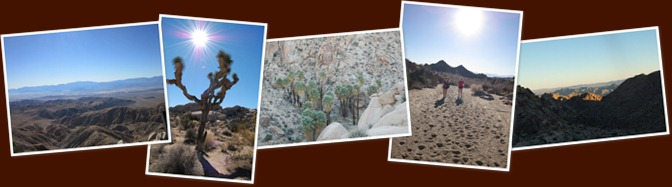 View Joshua Tree 2