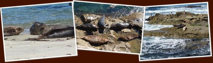 View seals