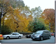 Central Park Fall 4