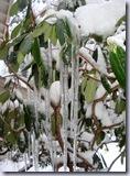 a-Rhodie_snow 3